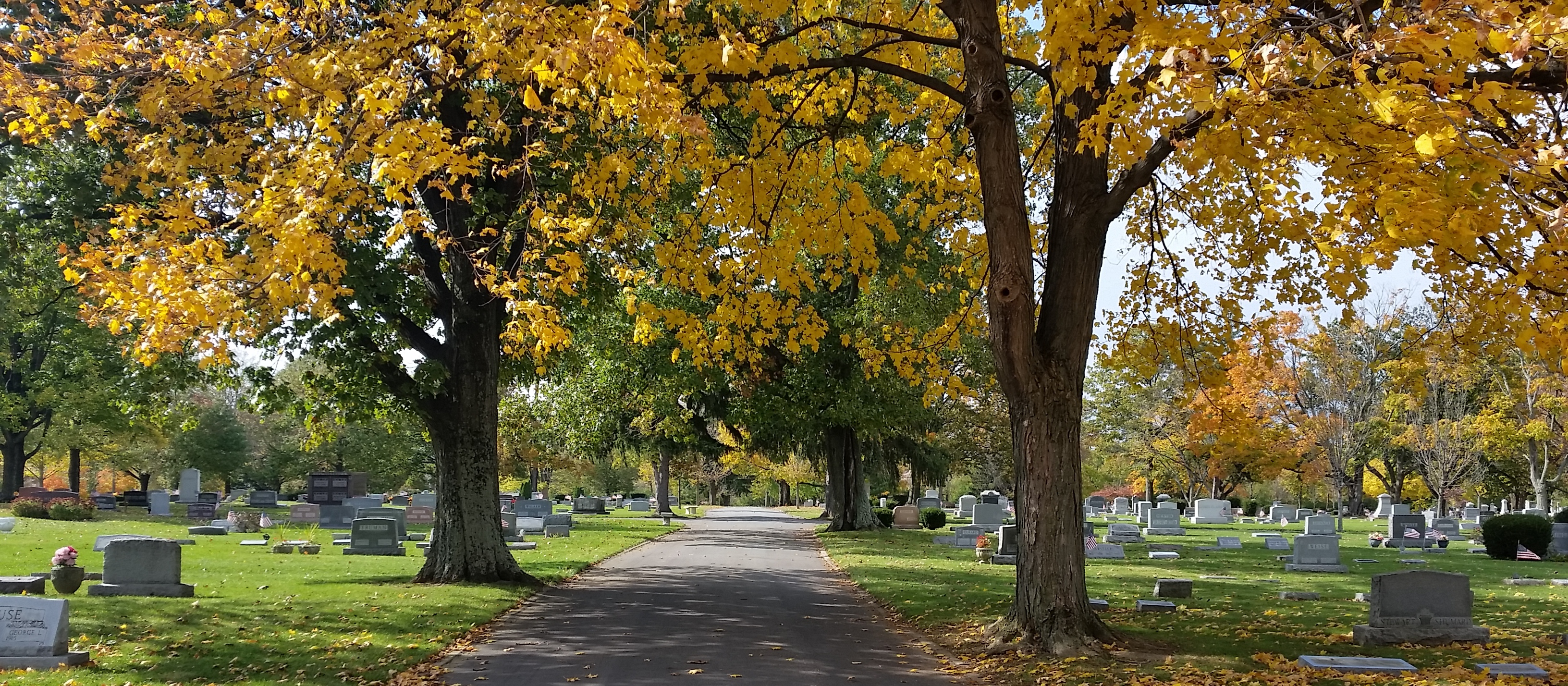 Autumn Leaves at Rose Hill Cemetery